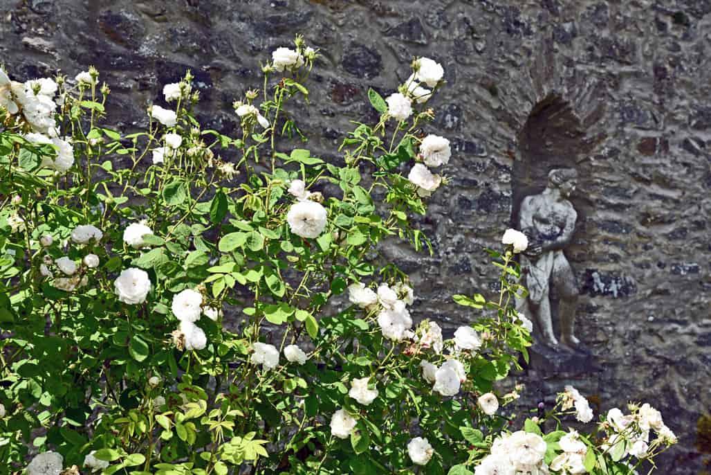 blair-castle-flowers-3-resized