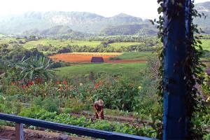 Finca Paraiso Vinales Valley cuba tours