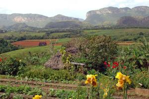 vinales valley cuba tours