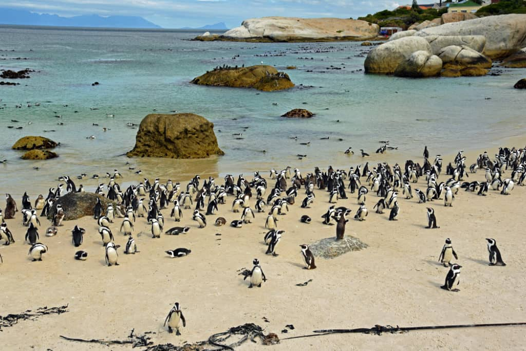South Africa Essential History Expeditions