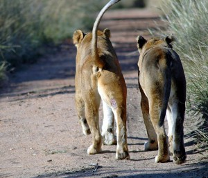 South Africa educational tours