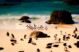 Boulder Penguins Beach